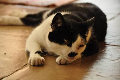 Purr Purr the cat